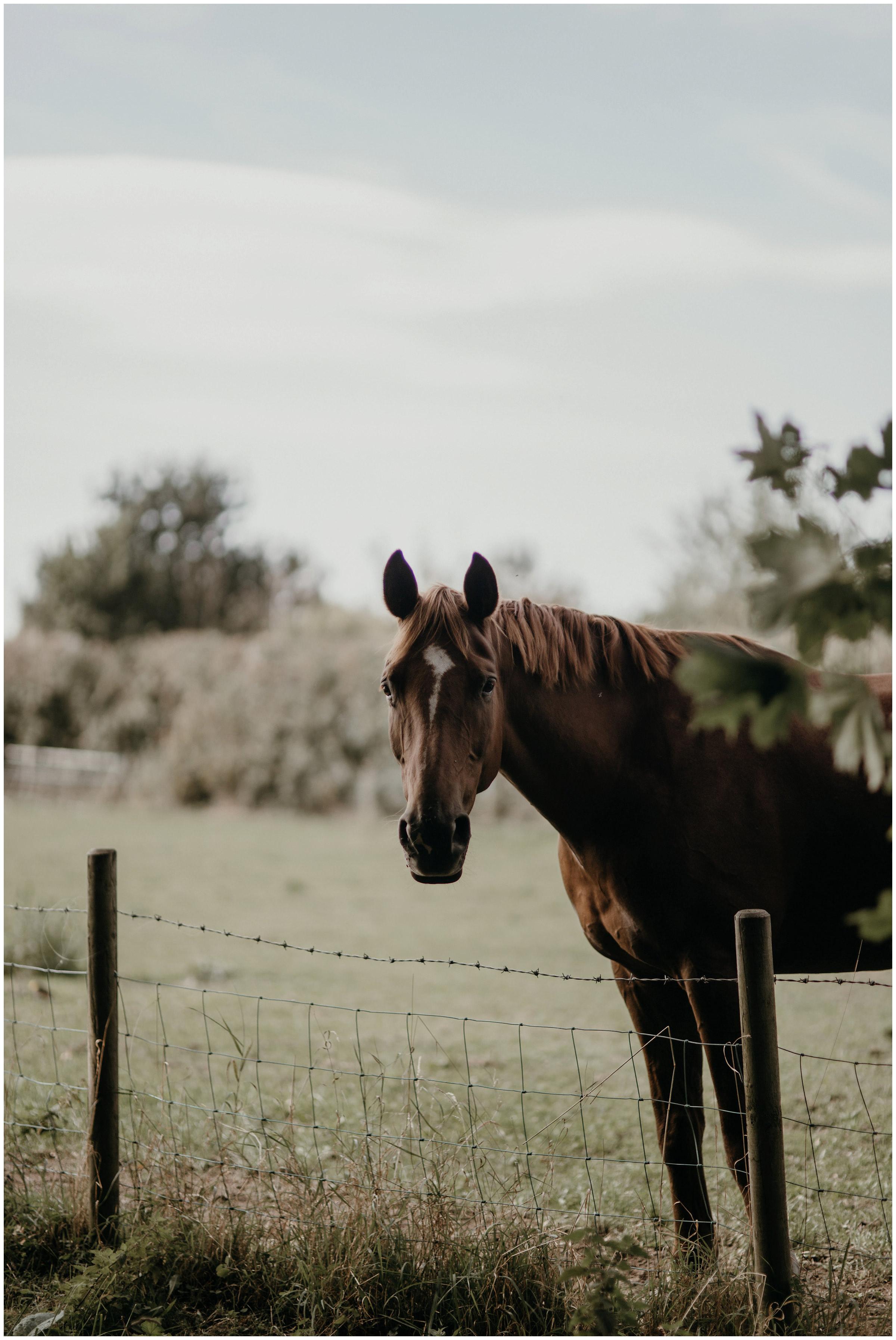horse york england
