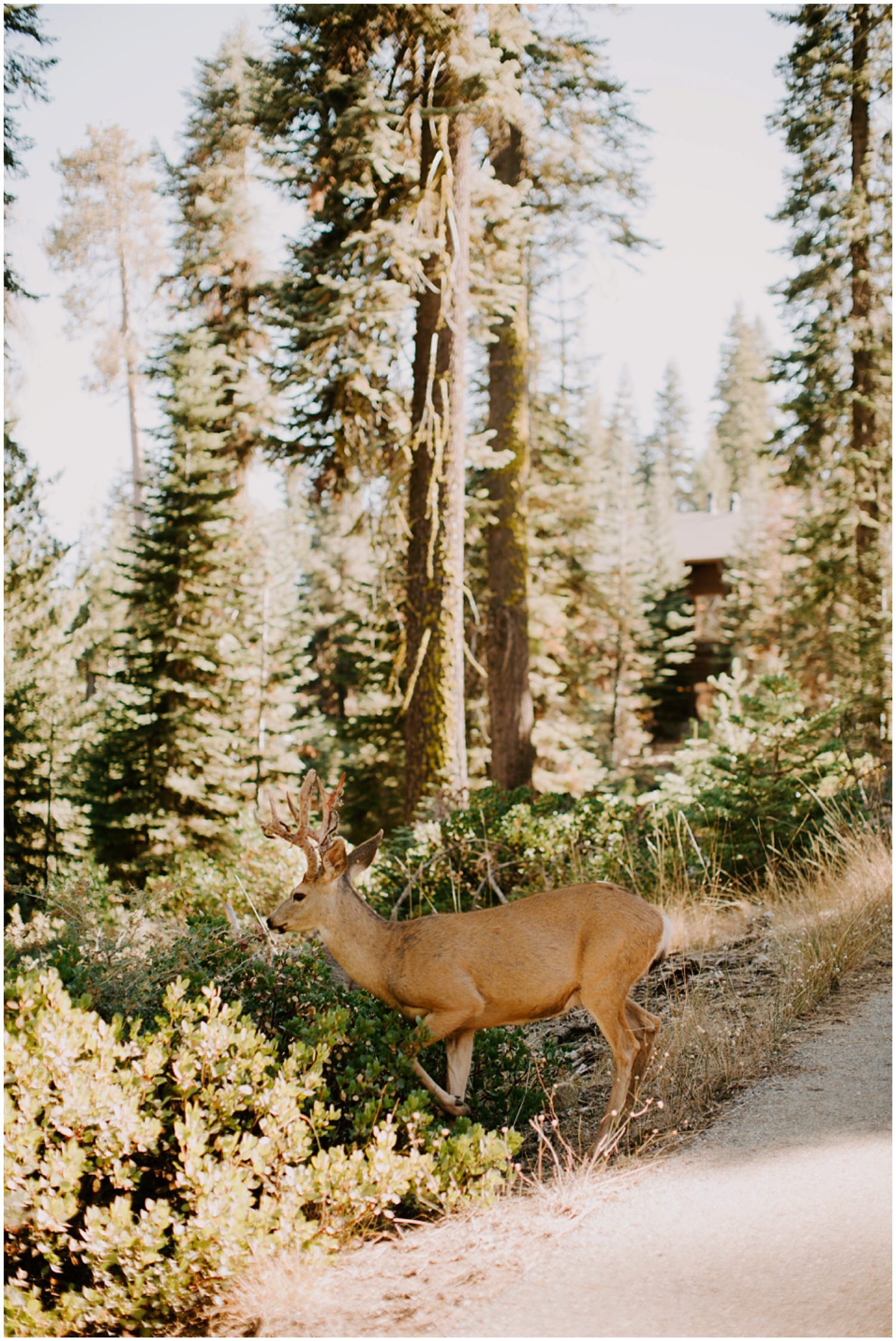 deers at sequoia national park intimate wedding ceremony